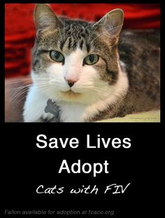 adopting a cat with FIV