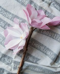 Wax paper magnolia -- one of my favourite flowers!