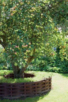Ландшафтный дизайн в саду. Обсуждение на LiveInternet - Российский Сервис Онлайн-Дневников