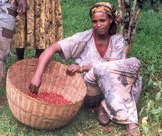 Female coffee farmer in Ethiopia / Jeune femme récoltant le café en Éthiopie Kenya, Home Coffee Machines, Community Coffee, Expensive Coffee, African Countries, African Tribes, African Diaspora, African Culture, Best Coffee