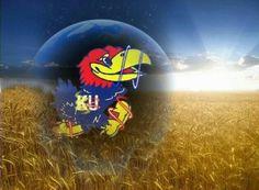 KU Kansas Jayhawks Basketball, Basketball Teams, University Of Kansas, Kansas City, Go Ku, U Rock, Sports Wallpapers, Favorite Things, Pride