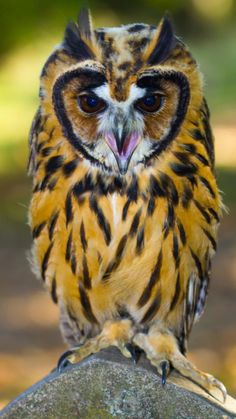 Never seen an owl of this colouring before. A beauty!