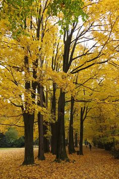 bagafarna-foto: Jesień w Parku Miejskim w Gorlicach