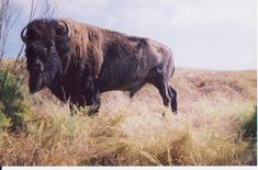 "Pictures by Tony while in Catalina Island, California .... Summer 2001.    Buffalo belongs to those who take ownership over its future.  Show your CityLove!    Help Tony CL continue to ""Promote Buffalo"" through partnerships, fundraisers and other community development ideas.    Share your favorite Buffalo picture! -- info@cityloveshirts.com"