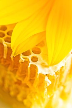 Yellow | Giallo | Jaune | Amarillo | Gul | Geel | Amarelo | イエロー | Colour | Texture | Style | Form |  Sweet honeycomb with honey and yellow flower.