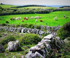 County Clare, Ireland.                                    Who know there is a place called county clare in Ireland!?