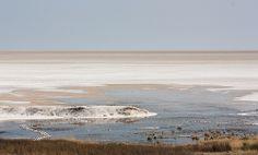 Etosha Pan - Namibia