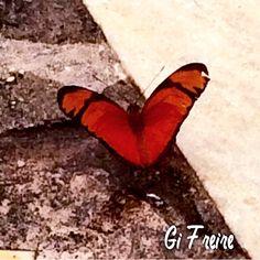 metamorfose vermelha ... Butterfly