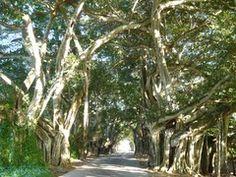 Panoramio - Photo of Entrada a La Demajagua, Isla de La Juventud, Cuba