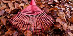 Zužitkujte spadané listí a jehličí