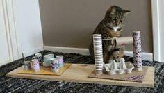 Diy Jouet Pour Chat, Cat Love Quotes, Diy Cat Toys, Cool Cat Toys, Cat Toilet, Kitten Toys, Gatos Cats, Unusual Animals, Unusual Pets