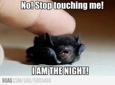 I AM THE NIGHT! I really did LOL!