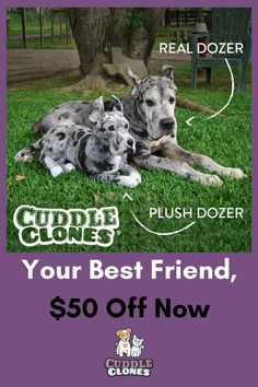 abef70a809 Turn your favorite buddy into a plush clone with Cuddle Buddy! Submit your  pictures