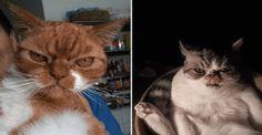Les chats sont trop mignons. Et quand ils décident de semer la zizanie et de faire des bêtises en veux-tu en voilà, découvrez ce que ça donne !
