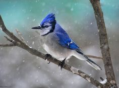 Un paso más allá: <strong>El mejor objetivo para fotografía de aves</strong>