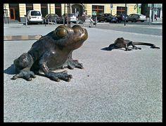 Frogs and lizards - Jeseník