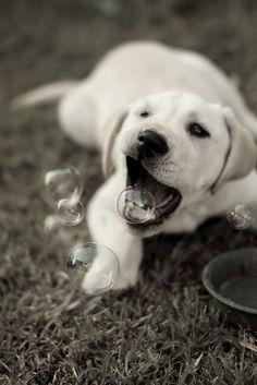 bubble retriever :)