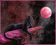 When the black panther spirit appears in your life, it is a symbol of releasing your desires. Since That's The Case I'm Walking Like A Panther. Black Panther Drawing, Black Panther Cat, Black Panther Tattoo, Panther Leopard, Big Cats Art, Cat Art, Beautiful Cats, Animals Beautiful, Noir Tattoo