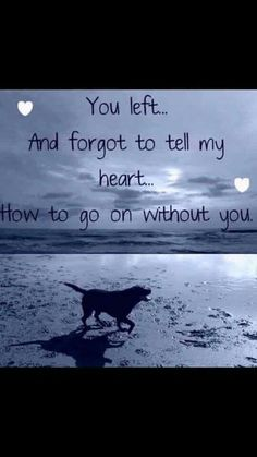 Losing A Dog Quotes Grief Rainbow Bridge Pet Loss Someone Special Quotes, Missing Someone Quotes, Dog Death Quotes, Death Quotes Grieving, I Love Dogs, Puppy Love, Lucky Puppy, Miss My Dog, Pet Loss Grief