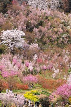 """Walk of Paradise Fukushima-Japan""  *-*."