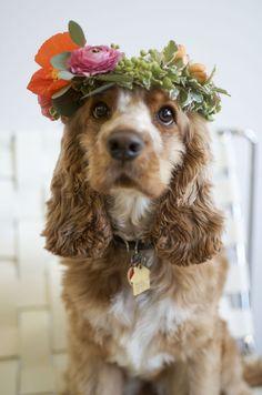 Flower child I #fortheloveofdog