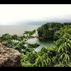 """In The Jungle"" por Carolina Bang"