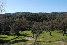 Bosque en Aracena, Huelva. | WWF