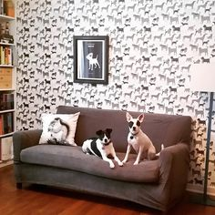 Dog Park (Gray) wallpaper and matching dogs! (via Sarah Jerome)