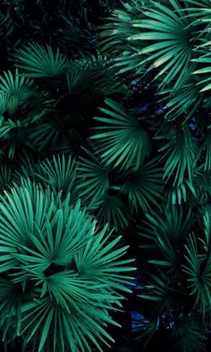 28 Ideas For Flowers Tropical Pattern Nature Green Leaves, Plant Leaves, Green Plants, Go Green, Shades Of Green, Palm Trees, Planting Flowers, Greenery, Flora