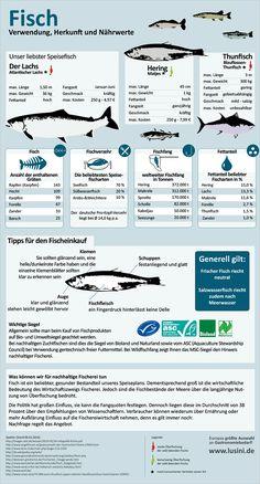 Lusini Infografik - Fisch