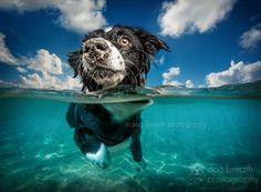 There is a lot of amazing dog photography out there but puptographer Kaylee Greer stands out as one of the best in the world.