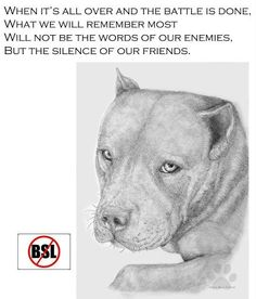 """BSL Is a clear violation of our Amendment Rights. Passing such a law will undo everything our Forefathers fought for in the war of Independence. Supporting BSL is supporting everything that stands against Democracy. Dog Love, Puppy Love, Breed Specific Legislation, Pitt Bulls, Bsl, Pit Bull Love, Dog Memorial, Pitbull Terrier, Fur Babies"