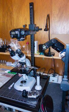 Zeiss Standard photomicrography setup