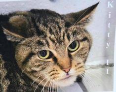 Meet Kitty II TOHCS@LittleShelter.com (631) 651-9788