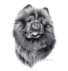 Hey, I found this really awesome Etsy listing at https://www.etsy.com/listing/11414632/chow-chow-dog-art-print-signed-by-artist