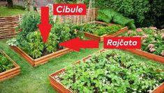 Už vím, kam zasadím sazenice rajčat: Nejlepší vychytávky pro výsadbu zeleniny a bylinek - držte se tohoto a úrodu budete počítat na kila!   iRecept.cz Plants, Gardening, Lawn And Garden, Plant, Planets, Horticulture