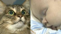 Community Cat Saves Baby From Freezing To Death at BaxterBoo