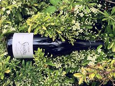 Saint Sylvestre, 2014 Synopsis : La bouche est gourmande et saline, avec ses cerises à l'eau-de-vie sur un fond réglissé, surprenante de fluidité avec son acidité bien dosée.