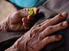Mãos de um velho pagé segura porção mínima de planta medicinal