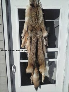 If you've been hunting coyotes long enough or just getting started there will come a time you'll want to have one tanned. Whether its your first coyote or a particular one you were after or just a unique color or hunt, you'll want one for yourself. But some questions arise. Where do I get it …