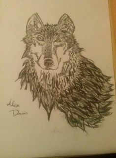 Wolf  Sketch created with charcoal