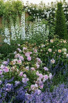 Roses Gardening Mixed Borders - Rosa 'Olivia Rose Austin' / bred by David Austin Mixed Border, White Plants, Landscape Edging, Home Landscaping, Garden Borders, Garden Paths, Delphinium, English Roses, Garden Beds