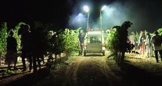 El próximo 10 de septiembre se celebra la V Gran Fiesta de la Vendimia Nocturna en la Bodega Vihucas, en Villacañas (Toledo). La…