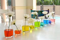 rainbow water with white flowers-- science experiment