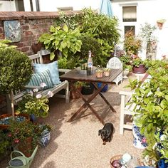 garten design When a budget is tight, gravel is a good alternative hard surface for the garden - 20 Potted-plants-various-sizes-small-garden-ideas Keith Henderson Garden Ideas For Small Yards, Garden Ideas To Make, Small Garden Design, Garden Ideas For Small Spaces, Small Garden Pots, Small Garden Inspiration, Small Plants, Small Victorian Garden Ideas, Small Trees