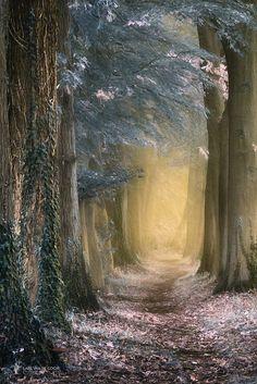~~Irresistible forest path by Lars van de Goor~~