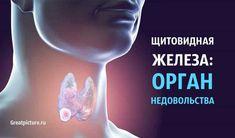 Щитовидная железа: Орган НЕДОВОЛЬСТВА Fitness Diet, Health Fitness, Thyroid Gland, Natural Antibiotics, Diet Chart, Reflexology, Transformation Body, Oprah, Psychology