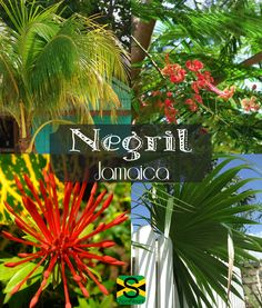 Change your view. Change your mood! In Negril, Jamaica