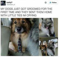 Little ties in not ok