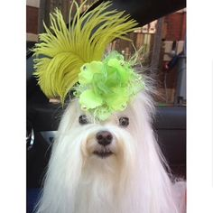 The coolest handmade pet fashion accessories you will find designed by Orostani Couture.
